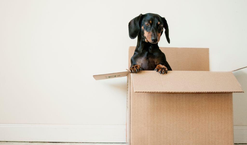 Dog and box