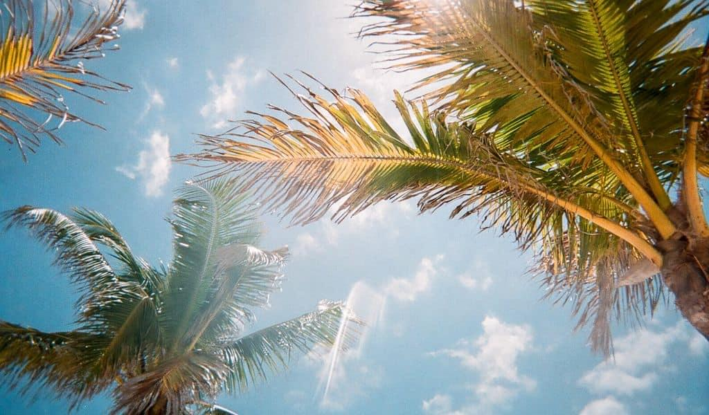A view of palm trees from the ground, with sun streaming through the fronds