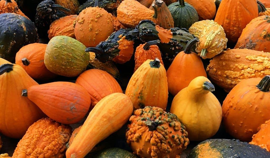 Winter squash, pumpkins, and gourds, all my! All grown in Ohio with care