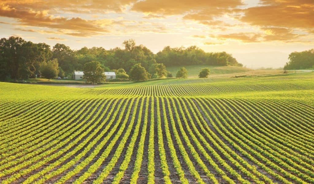 Minnesota agriculture is rooted deep, lush green lands