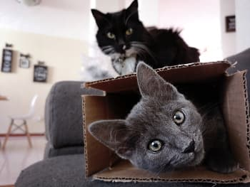 Two cats and moving boxes