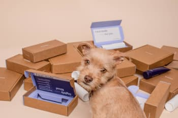 Dog with moving boxes