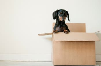 Dog happy about finding good movers in Dallas