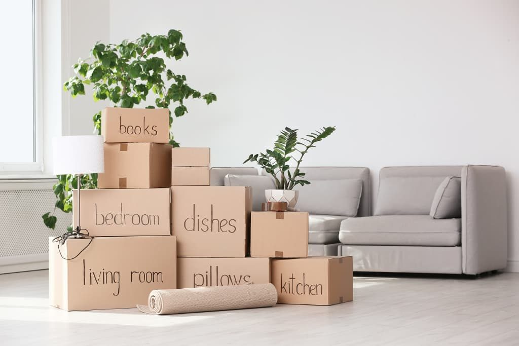 Plants on top of moving boxes.