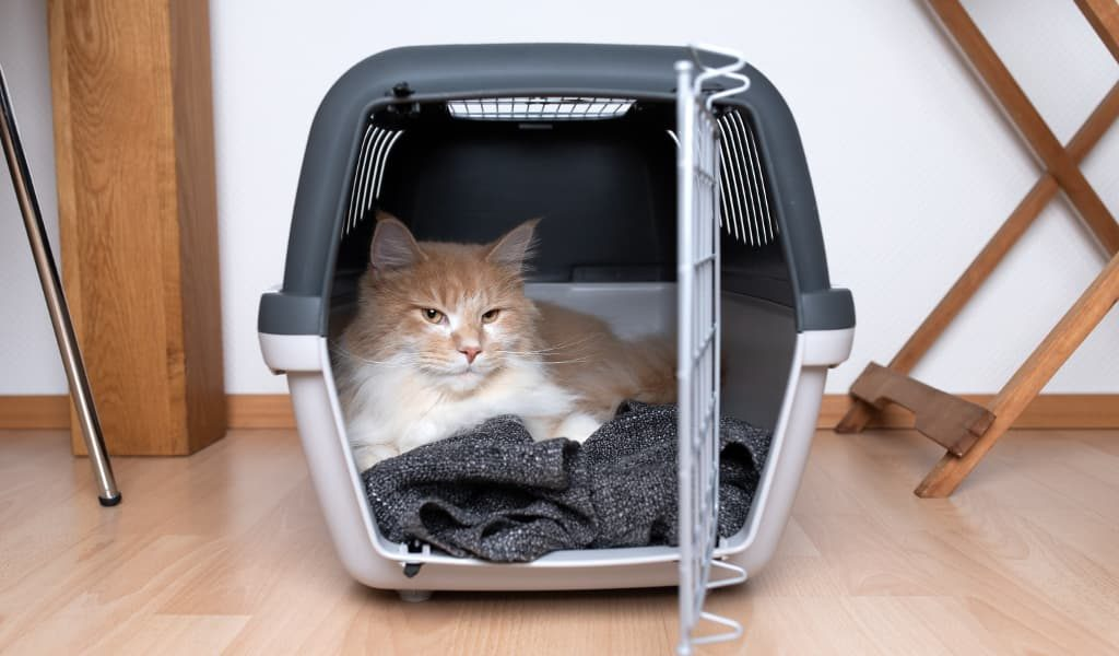A cat laying inside a carrier