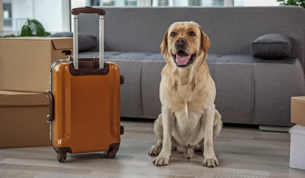 A dog with a suitcase for moving to a new home