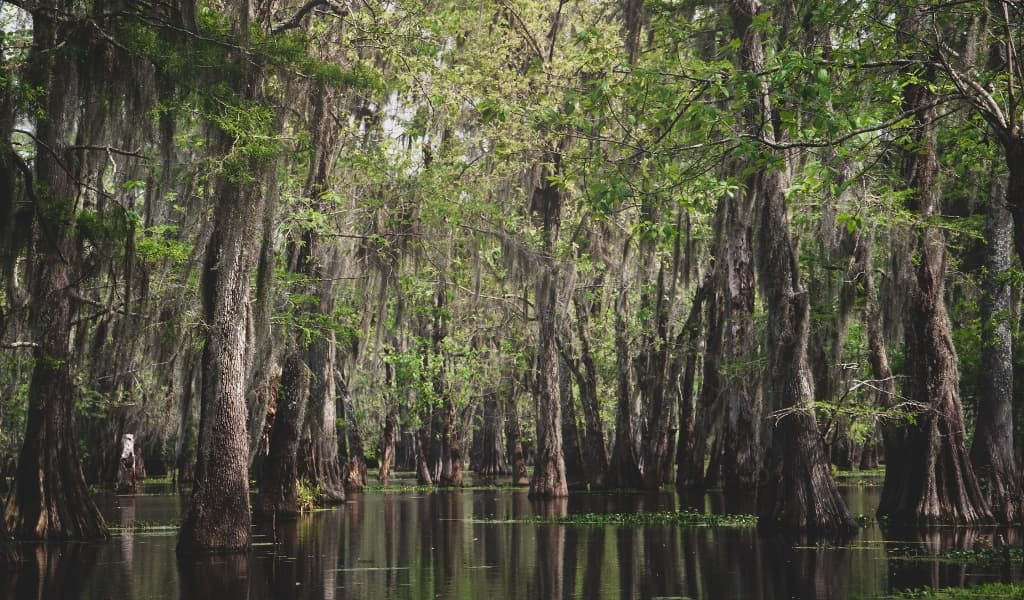 The popular Lake Martin in Lafayette, Louisiana