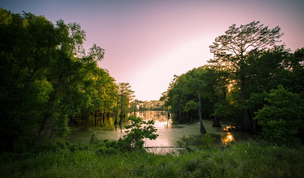 A glimpse of a bayou in Mississippi