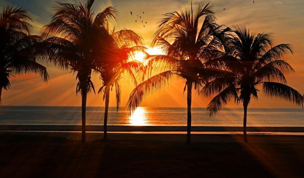 trees_golden_hour_miami